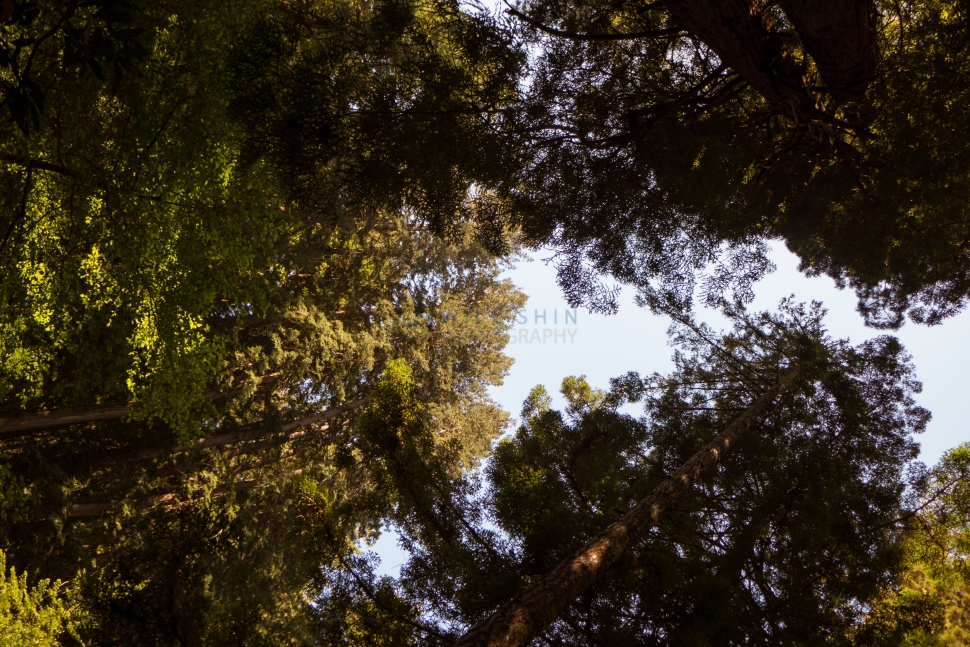 Hiking through Muir Woods National Monument (one of the highlights of the trip)